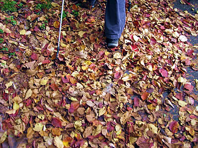 Nov.4th Regular Walking